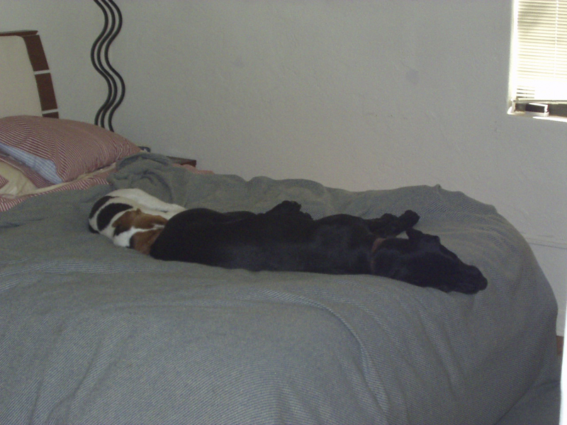 Its a dogs life.JPG - Napping on the bed - back in the day